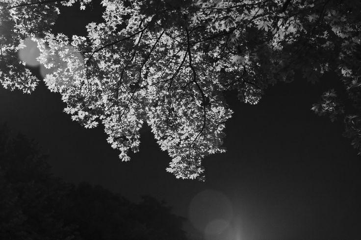 Light 3 by Hajnalka Farkas