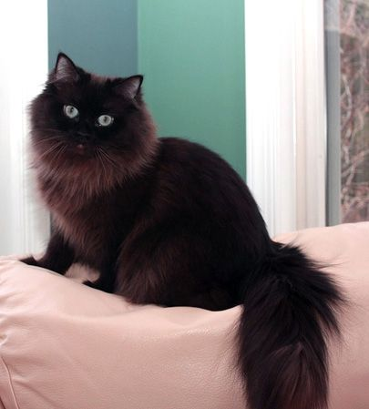 It looks like my friends cat but black... I DON'T MEAN IT THAT WAY YOU DIRTY MINDED PEOPLE
