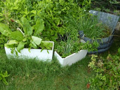 How to turn an old toilet tank into a container garden