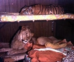 true diversity.Big Cat, Lion, Real Life, Sleep Tights, Kids, Tigers, Dreams Life, Little Boys, Animal