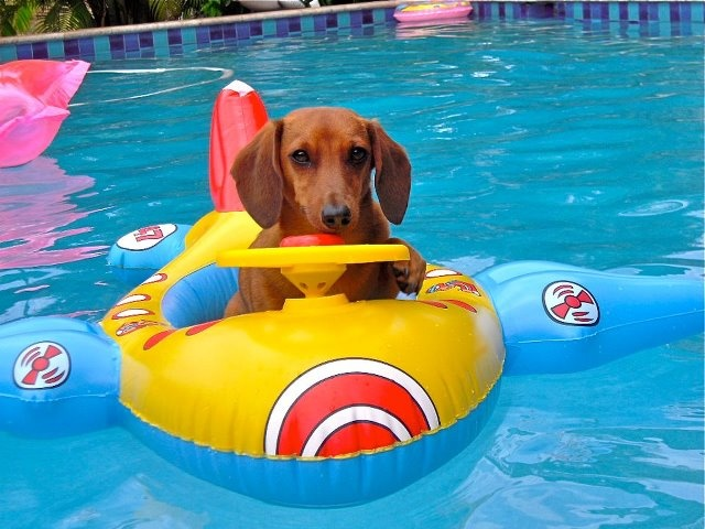 1668 best Wiener images on Pinterest | Dachshunds, Daschund and ...