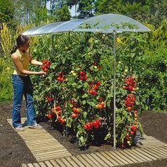 Garten - Tomatenparkplatz