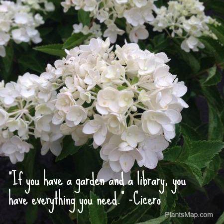 Create your own #mobile #plant library on #PlantsMap.com #plantcollections #arboreta #botanical #gardens #horticulture #landscapes #social #gardening #garden #journal  www.PlantsMap.com