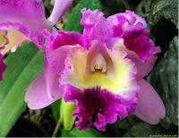 EL VERDADERO AMAZONAS VENEZOLANO: Flora