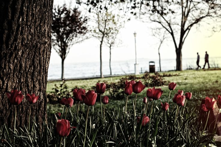 spring in istanbul - Istanbul's Fenerbahce park is very beautiful in spring