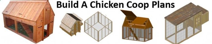 These are must have plans when building a chicken coop