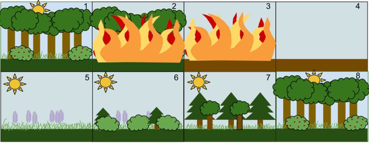 Ecological succession - Wikipedia, the free encyclopedia
