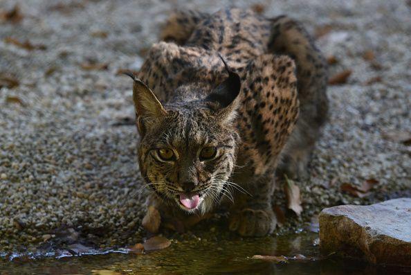 Quase 60% dos animais que têm espinha dorsal (peixes, aves, anfíbios, répteis e mamíferos) foram extintos desde 1970 por excessos humanos, de acordo com um estudo divulgado pelo Living Planet.