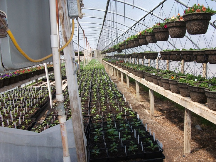 We offer a variety of sizes and styles to meet individual needs and desires. We also offer boxes of bedding plants of seasonal favorites in large quantities. Some favorites include Geraniums, Marigolds, and many more.
