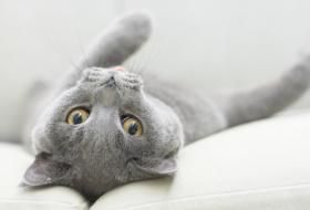 What Is the Dying Behavior of Cats?
