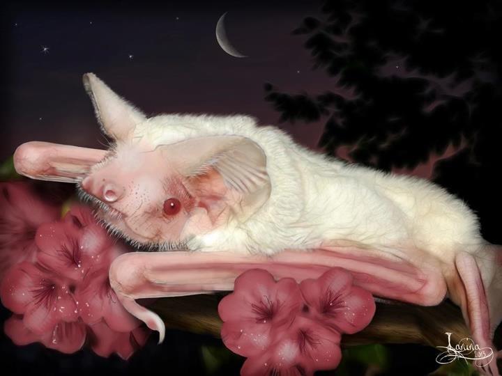 Art for Bats