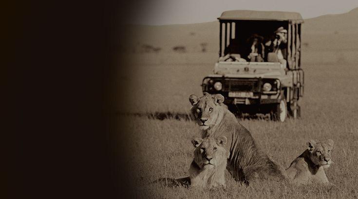 On safari with Lederle Safaris