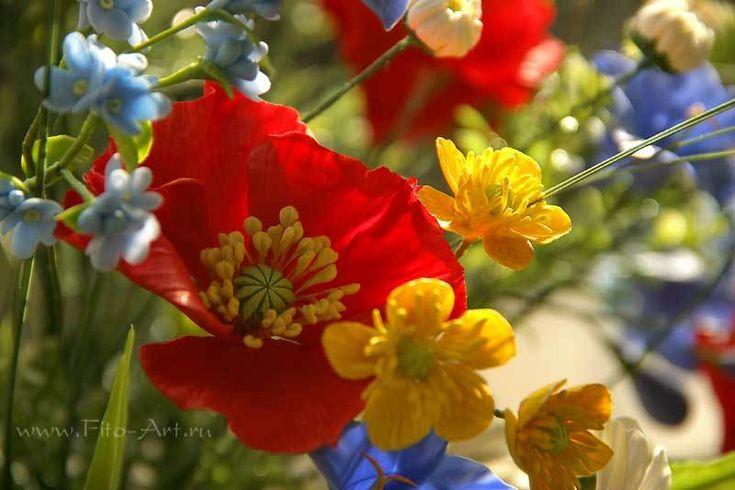 полевые цветы керамическая флористика