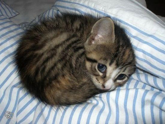 Cute baby kitten.