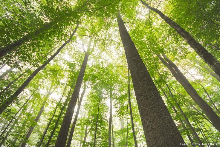 La forêt de Tronçais (Allier)