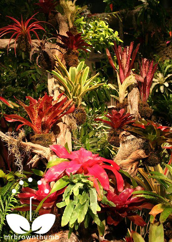 air plants – My Chicago Botanic Garden