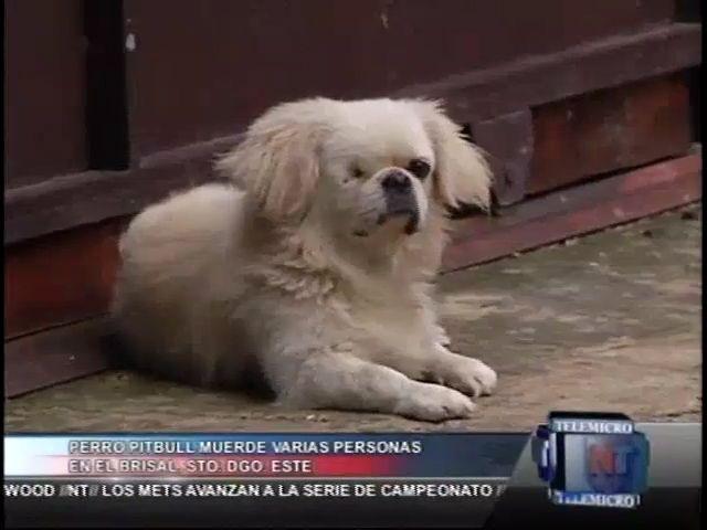 Perro Pitbul Ha Mordido Varias Personas, Mató Un Perro Y Le Sacó Un Ojo A Otro En SD Este #Video