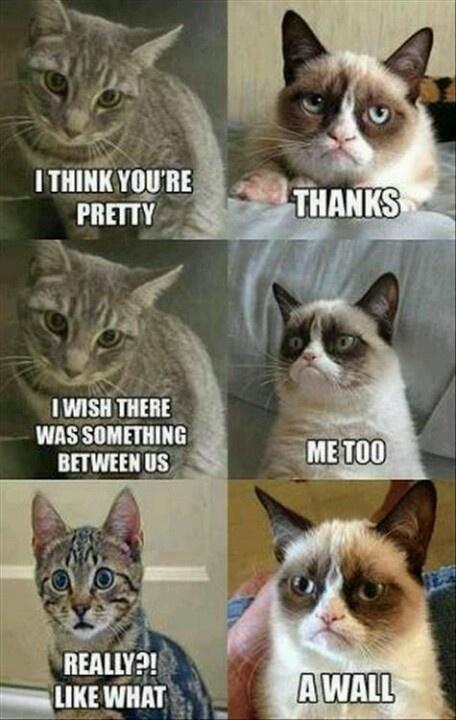 I <3 grumpy cat