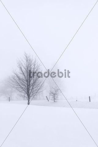 Trees snow-covered winter landscape in the mist Belmicke Bergneustadt Oberbergischer Kreis North Rhine-Westphalia Germany Europe