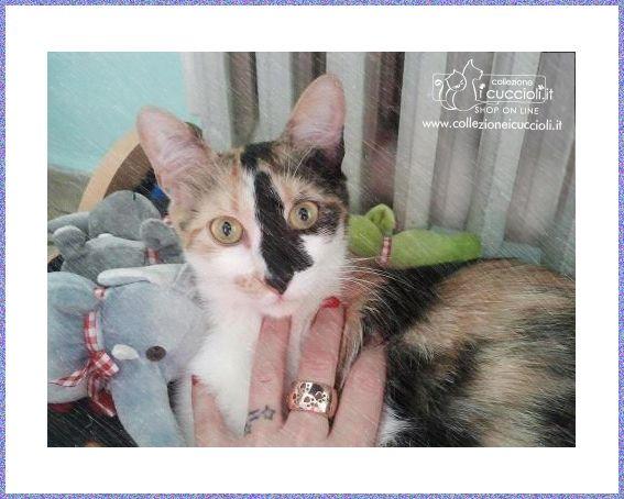 """Anello in #argento """"Collezione i cuccioli"""" con le zampine del tuo #gattino."""