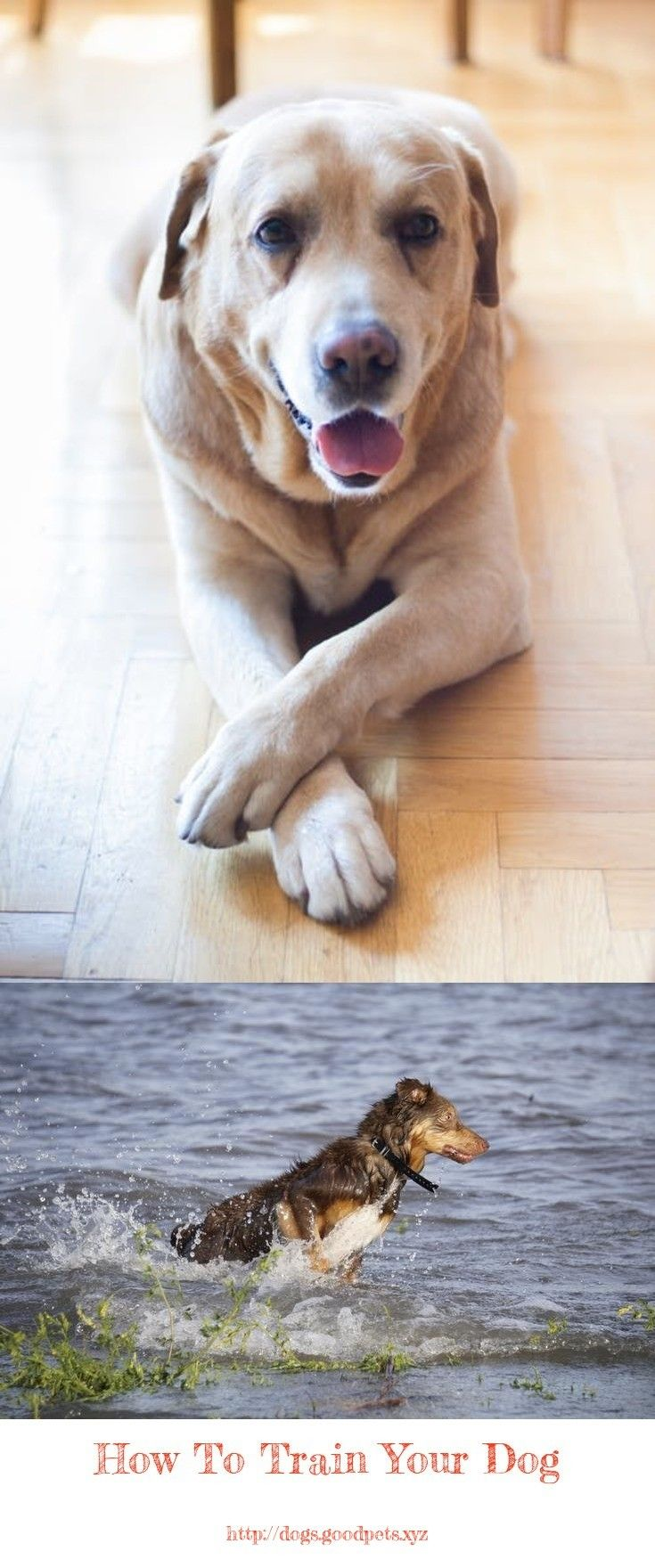 Dog Training Tips In Hindi Dogtrainingtips Dogs Your Dog