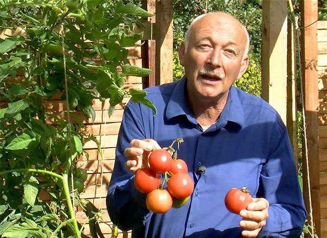 Suivez les conseils d'Hubert le jardinier pour faire mûrir les derniers légumes du potager.