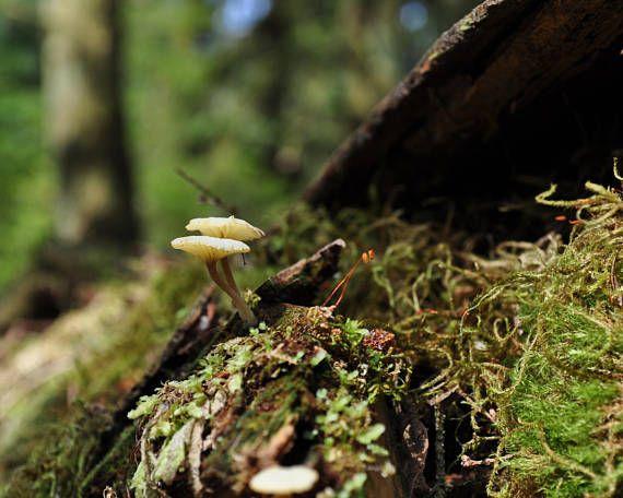Mushroom Wall PrintMushroom PhotographyFine Art