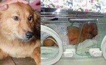 I sentimenti degli animali Neonata in un sacchetto: un cane la sente piangere e la salva
