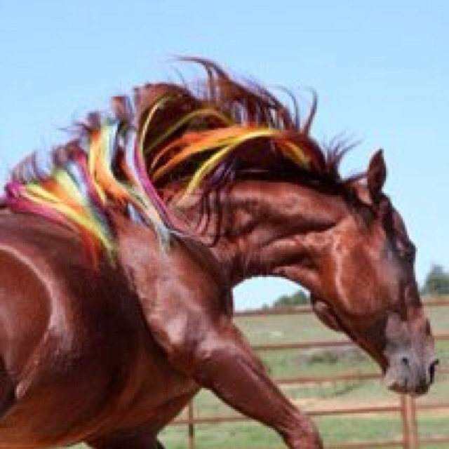 The 32 Best Gypsy Tails Images On Pinterest Gypsy Horse And