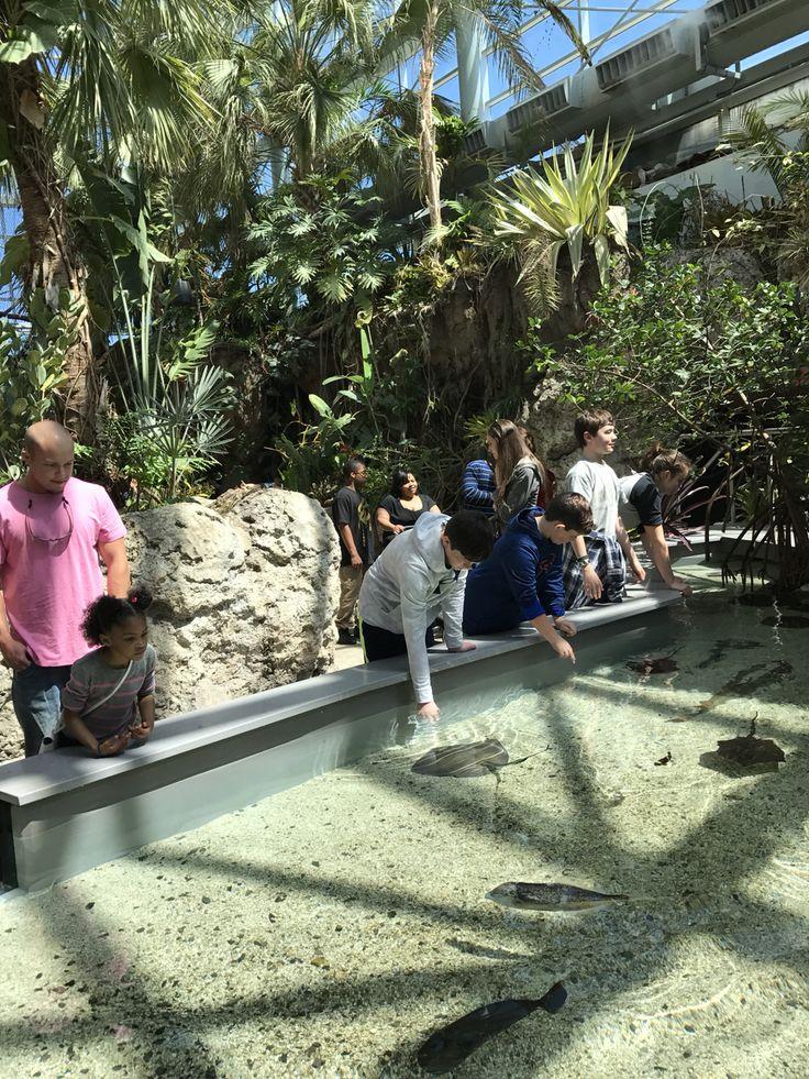 """Chattanooga Aquarium """"Beautiful"""""""