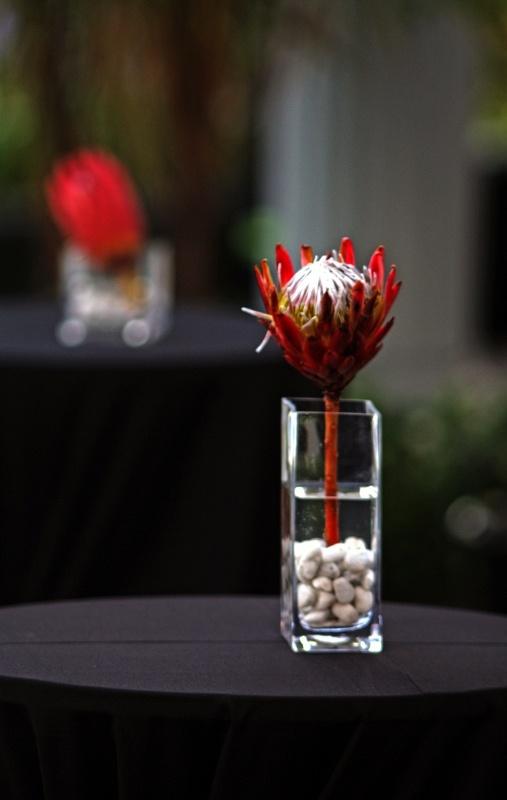 Protea class - decor