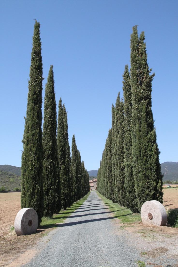 I Cipressi - Castiglione Della Pescaia, ! Province of Grosseto , Tuscany region Italy