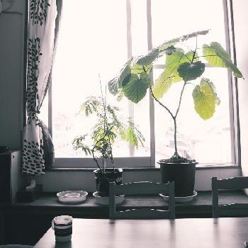 入選作品は月刊フローリスト7月号に掲載!!『暮らしを彩る植物』のフォトコンテスト|[GreenSnap]観葉植物や花の名前、ガーデニング雑貨のおすすめが見つかる!