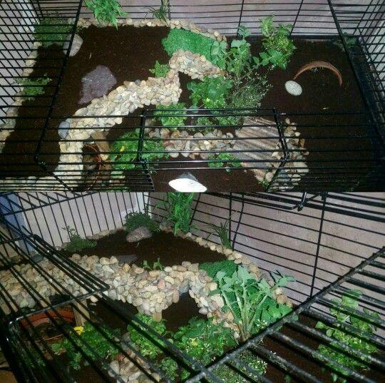 Simple Diy Indoor Tortoise Enclosure Habitat Using Rabbit Cage Coco Coir Planted Weeds And