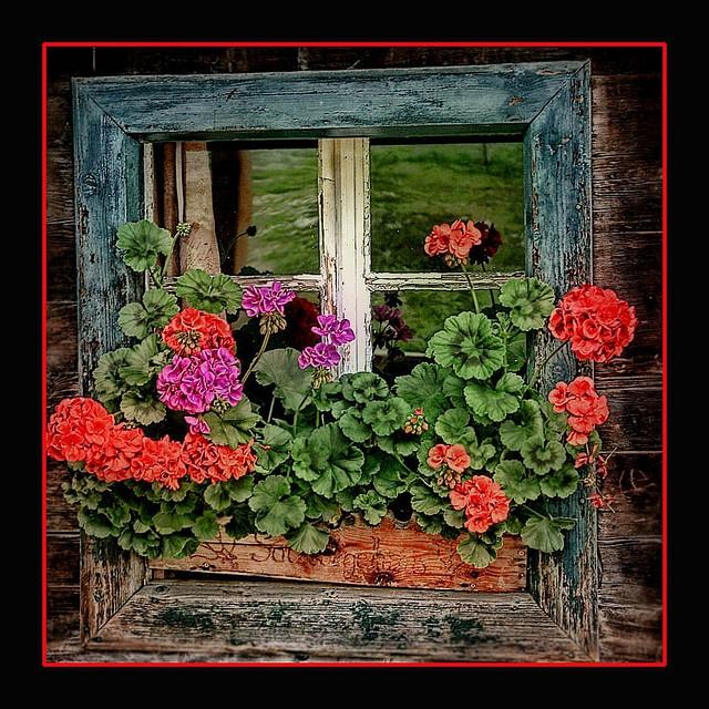 Ventana con flores