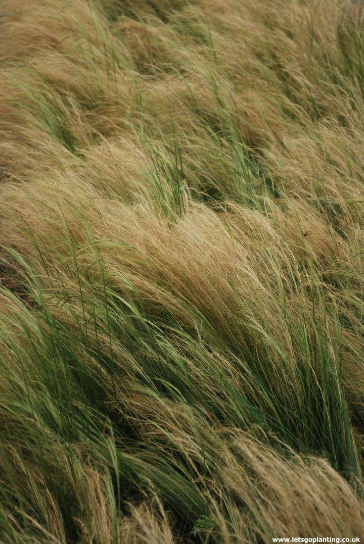 159 best ornamental grasses images on pinterest for Best decorative grasses