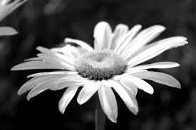 Flower Black & White