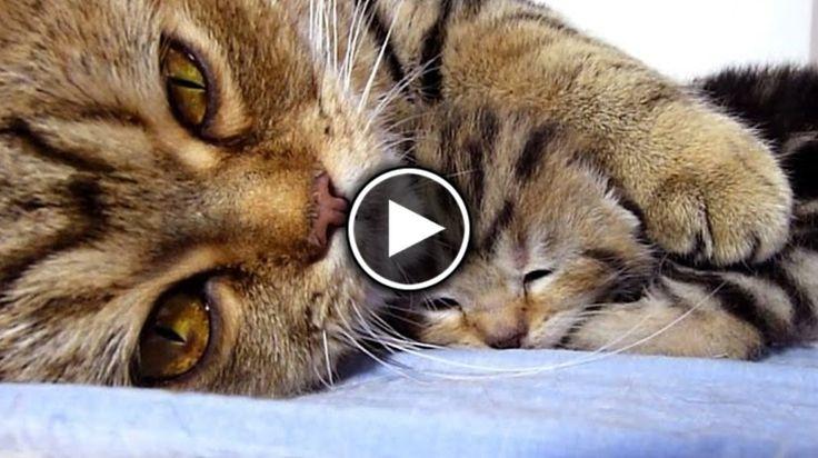 Когда котик хочет кушать или играть, сон хозяина ему не преграда!