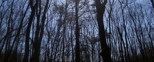 Hockomock Swamp | Beyond The Bridgewater Triangle With Kristen Good