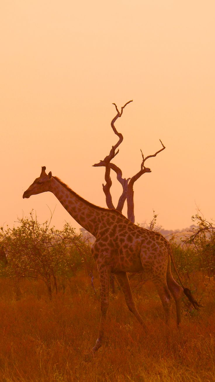 #wildlife #sunset #Namibia #travel #Africa