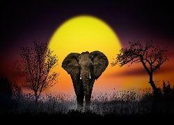 Słoń, Drzewa, Zachód słońca