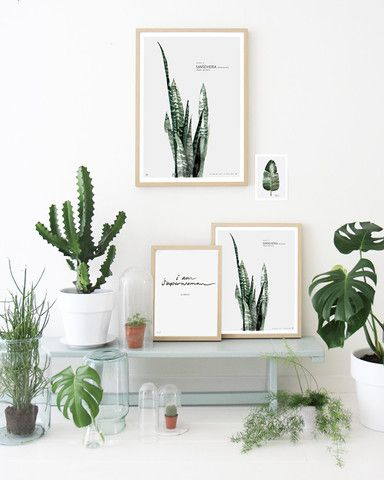 Limited Edition prints Urban botanic // 4 Plates Signed and numbered. Watercolor #urbanbotanic