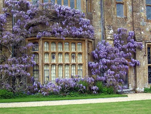 .Manor Born, Wisteria Awesome, Favorite Places, Gardens Pools, Flower Gardens, Beautiful Buildings, Wisteria Gardens, Manor Houses, Beautiful Things