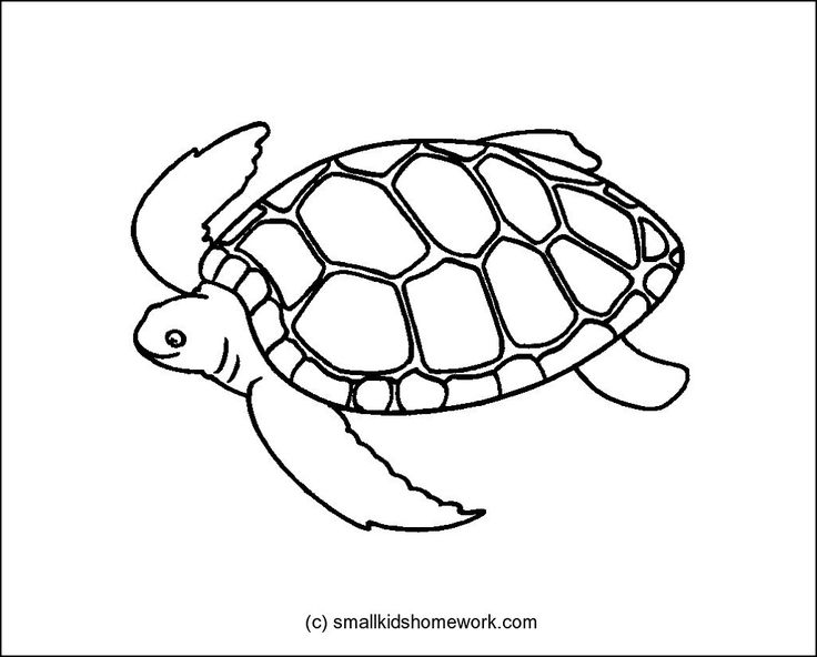 tortoise outline picture
