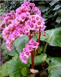 113 best plantes vivaces images on pinterest | flowers, gardens