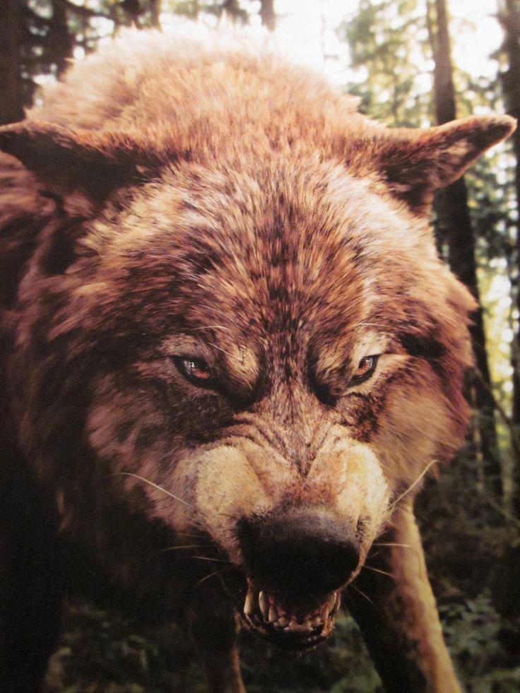 17 Best images about Twilight wolves on Pinterest ... Werewolf Twilight Jacob
