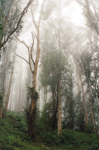 Tumblr: Enchanted Forest, Wood, Posts, Nature Trees, Places, Amazing Nature, Landscape, Της Γης Trees Earth S, Γης Trees Earth S Breath
