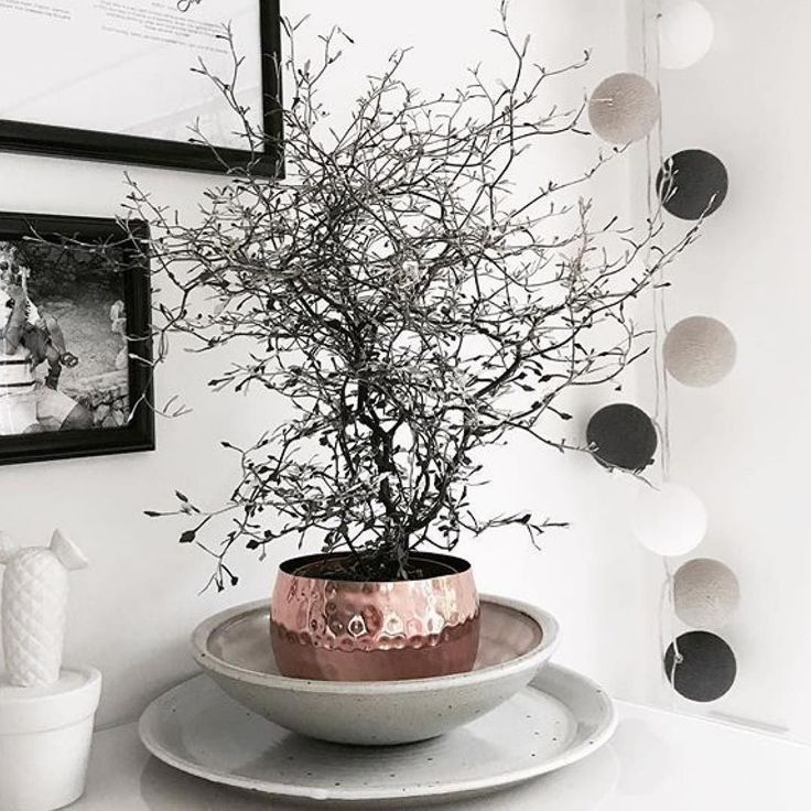 25 best sch nen dienstag ideas on pinterest sch nen. Black Bedroom Furniture Sets. Home Design Ideas