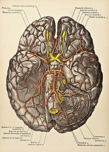 90 best brainneurospinal images on pinterest the brain cognitive enhancement is possible addieupbuy use coupon code addie25 fandeluxe Gallery