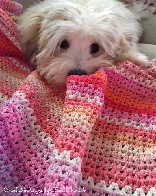 V-stitch blanket and the cutest Coton de Tulear puppy, Happy by BautaWitch.